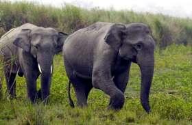 आधी रात को जंगली हाथियों ने मचाया आतंक, केले व धान की फसल को किया तबाह