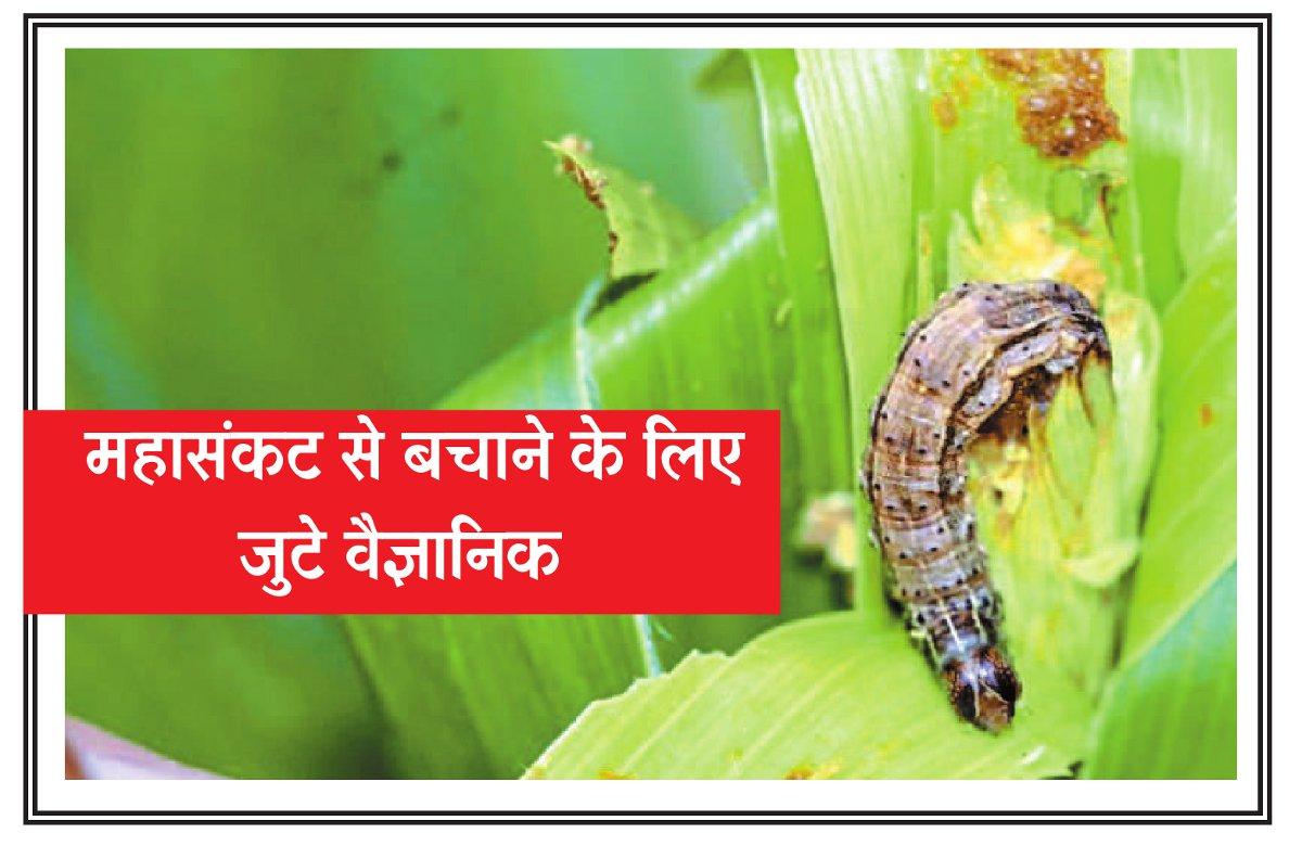 महासंकट: देशभर में फसलों पर खतरे की घंटी