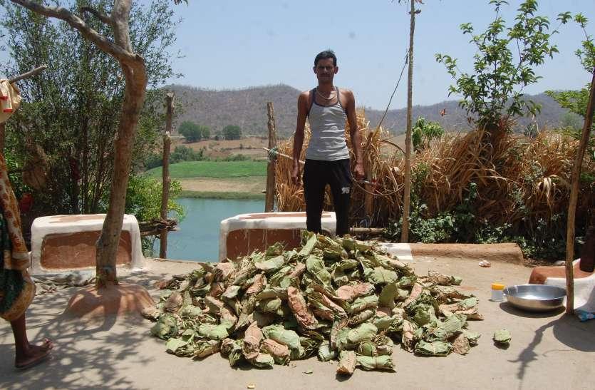 वन विभाग ने बंद की खरीदी ग्रामीणों के पास रखा लाखों का तेंदूपत्ता हो रहा खराब