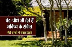 आपके घर के आसपास अपने आप उग आए पेड़-पौधे भी देते हैं शुभ-अशुभ संकेत! मिलता है ये फल