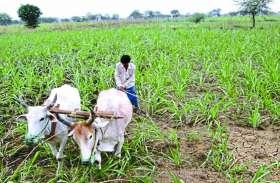 छत्तीसगढ़ में 25 हजार किसानों के कृषि ऋण अब तक नहीं हुए माफ
