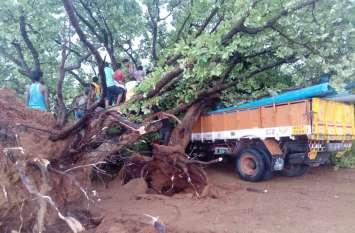 आंधी-तूफान में पेड़ उखड़कर ट्रक पर गिरा, पीछे सो रहे युवक की दबकर हो गई दर्दनाक मौत
