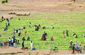 हजारों श्रमिकों में दिखा उत्साह, समय से पहले टारगेट पूरा, बंद होगा तेंदूपत्ता संग्रहण