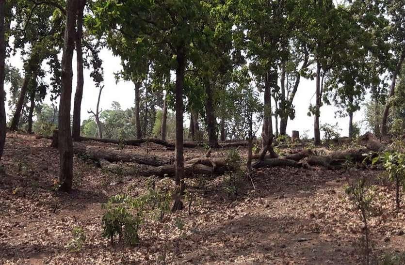 वनों की अंधाधूंध कटाई से बदल रहा मौसम, घाटी में भी भीषण गर्मी
