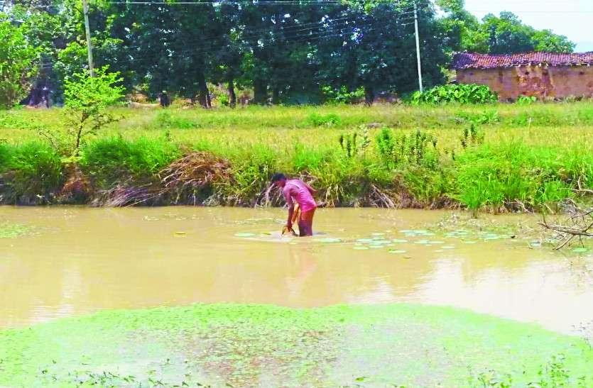 दुनियाभर में हो रही पानी के लिए मारामारी वहीं छत्तीसगढ़ के इस गांव में हर परिवार का है अपना तालाब