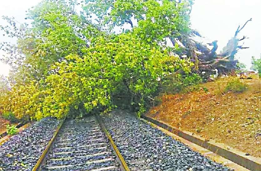 रेलवे ट्रैक पर गिरा पेड़, रेल यातायात प्रभावित
