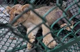 पशु तस्करी का भंडाफोड़, 3 गिरफ्तार