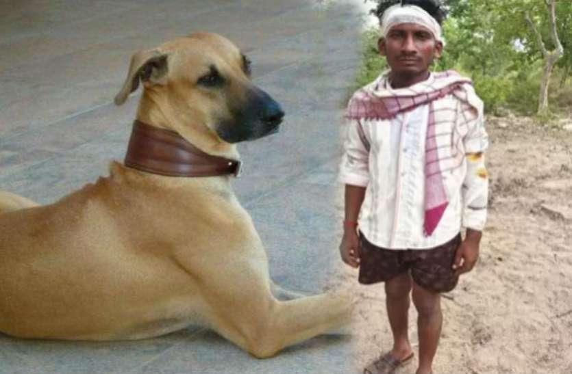 घायल मालिक की जान बचाने के लिए बाघ से भिड़ गया कुत्ता