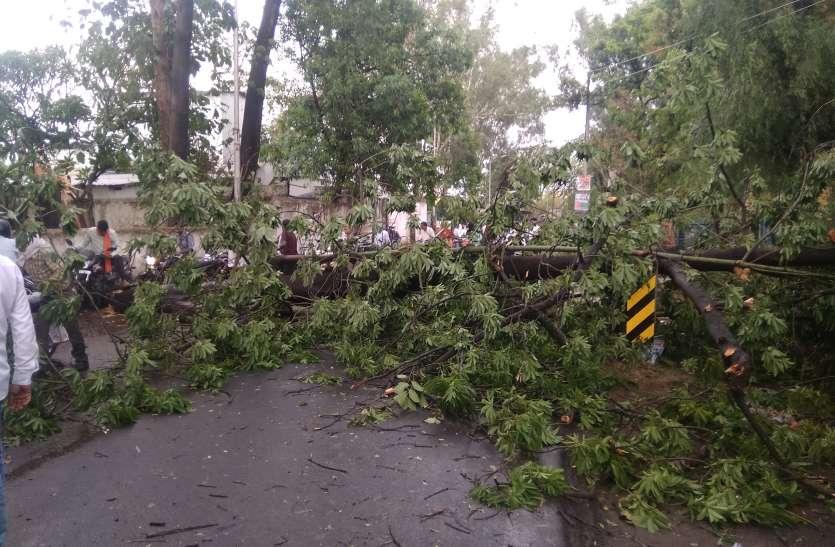 तेज आंधी में गिरे पेड़, शहर में छाया अंधेरा, प्री मानसून की बारिश ने मचाई तबाही
