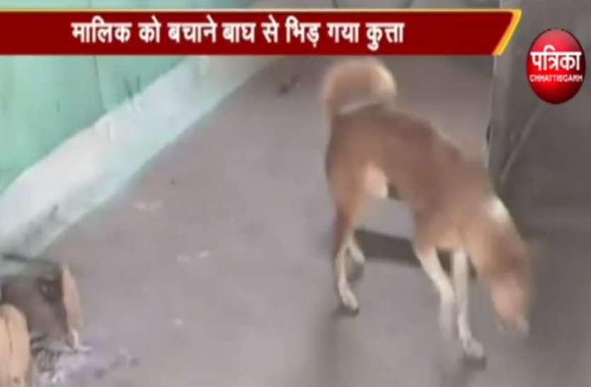 Video : मालिक को बचाने के लिए बाघ से भिड़ गया कुत्ता