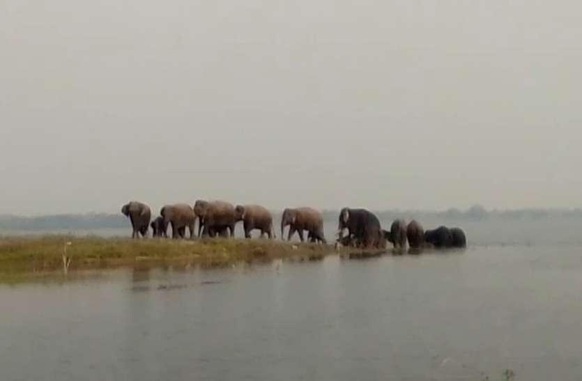 महानदी के अमेठी घाट पर पहुंचा जंगली हाथियों का दल, वन विभाग ने ग्रामीणों को किया अलर्ट