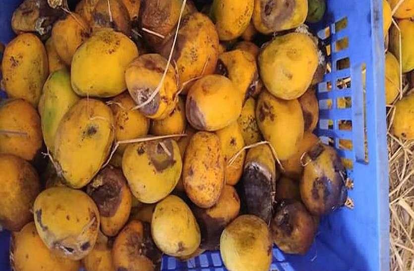 वाडीलाल कंपनी में सड़े गले फलों से बनाया जा रहा था ज्यूस