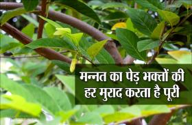 इस प्रसिद्ध मंदिर में लगा है मन्नत का पेड़, भक्तों की मांगी हर मुराद करता है पूरी