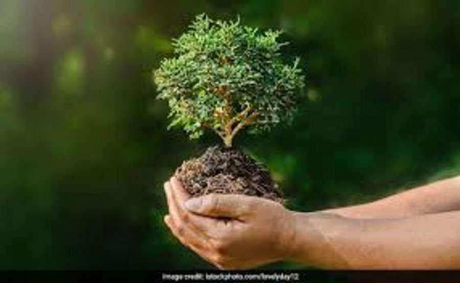 World Environment Day: मध्यप्रदेश के होशंगाबाद जिले की हवा में घुल रहा रसायनों का जहर