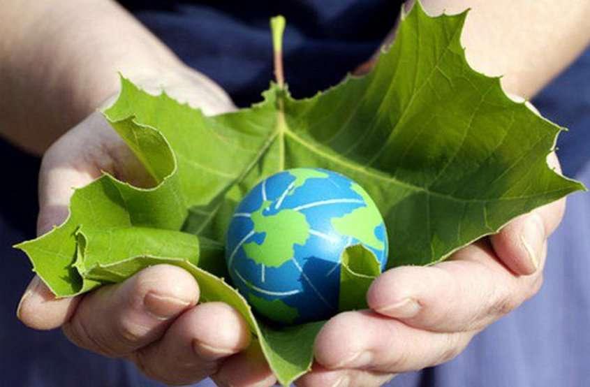 world environment day 2019 : पहले वृक्ष काट दिए और अब कर रहे पर्यावरण की चिंता, ऐसे में कैसे मिलेगी शुद्ध हवा