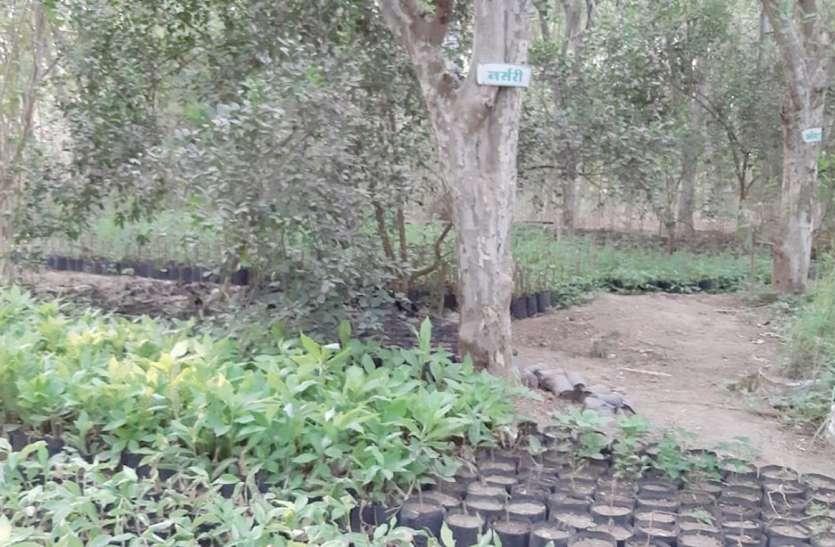 15 सालों की मेहनत से 80 एकड़ खेत में खड़े कर दिए दस हजार से ज्यादा पेड़
