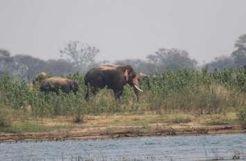 खेत में सोये हुए किसान को इस तरह कुचला हाथियों ने, देखिए वीडियो