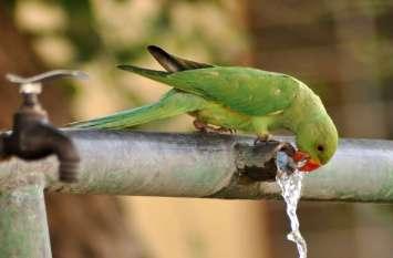 ये प्यास है बड़ी:श्रीगंगानगर में पड़ रही भीषण गर्मी से आमजन ही नहीं पशु-पक्षी भी त्रस्त हैं....देखें खास तस्वीरें