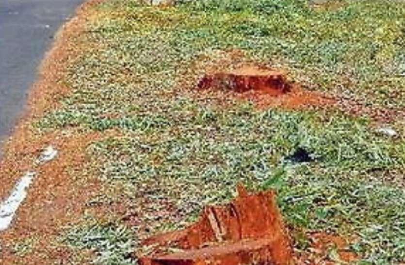 प्रशासन सुविधा के नाम पर परोस रही है लोगों को समस्या, चौड़ीकरण के नाम पर चढ़ा दिए हजारों पेड़ों की बलि