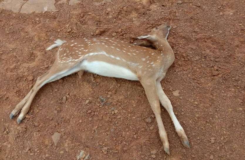 Deer dead bodies