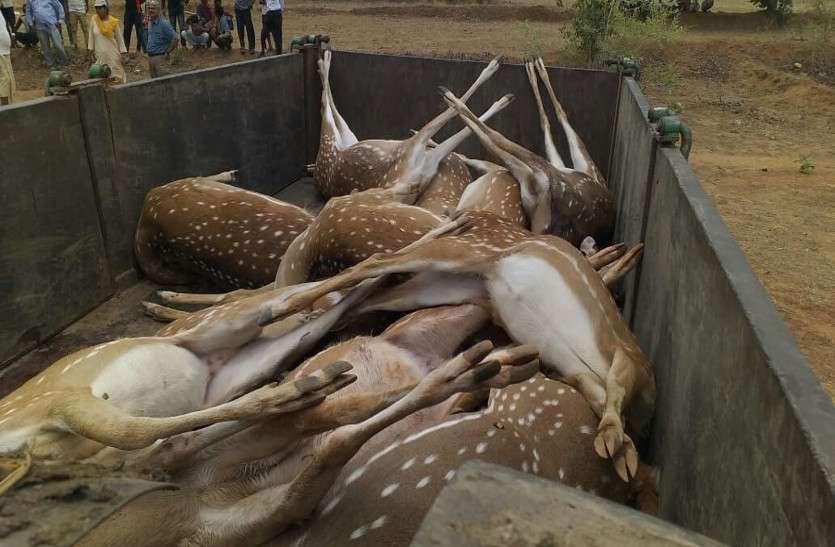 छत्तीसगढ़ के इस गांव में मिला 12 हिरणों का शव, जिसने भी देखा फटी रह गई आंखें