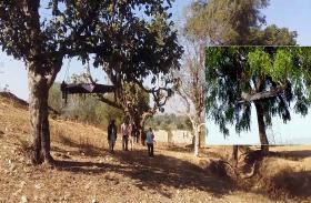 6 महीने से पेड़ पर लटका है ये शव, इस आदिवासी इलाके में लोग ऐसे ही मांगते हैं इंसाफ, जानें क्या है पूरा मामला