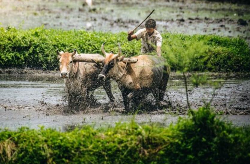 किसानों के लिए लाई गई नवीन सरकार की 'कालिया' योजना का दायरा बढ़ा, 32.34 लाख किसान और जुड़ेगे