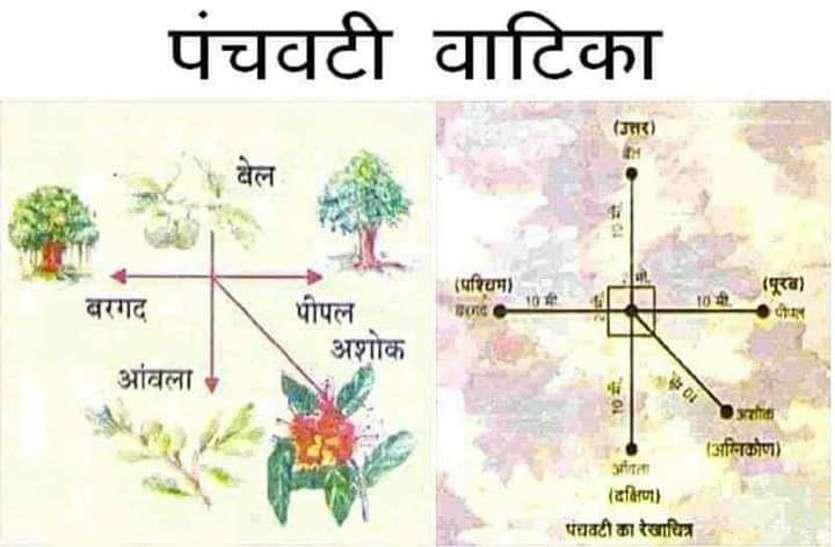 गर्मियों में बरगद के साथ लगाएं ये चार पेड़, इसके चमत्कारी गुण जानकर आप भी रह जाएंगे हैरान
