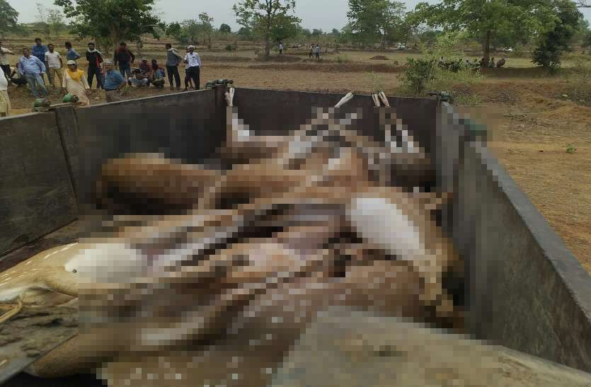 सरकार व प्रशासन की लापरवाही से लगातार छत्तीसगढ़ में हो रही जंगली जानवरों की मौत