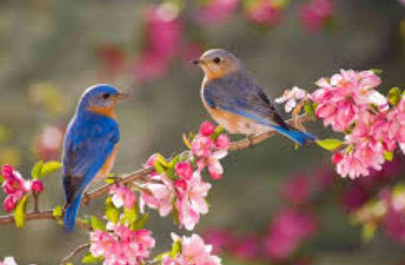 गंगा दशहरा 12 जून को, पक्षियों पर मँडरा रहा मौत का खतरा