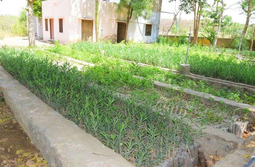 पौधे उगाने है तो किशनगढ़ से करो खरीद