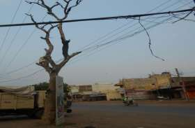 कभी भी गिर सकते है सूख चुके पेड़, सड़क किनारे चल रहे राहगिरों को खतरा, आंधी चलने से तार पर गिरते ही छा जाता है अंधेरा