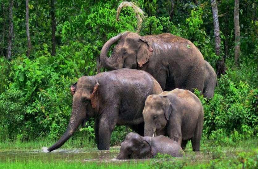 हाथियों के मूवमेंट से बढ़ा ग्रामीणों में ख़ौफ़, वन अमला बैठा है बेफिक्र