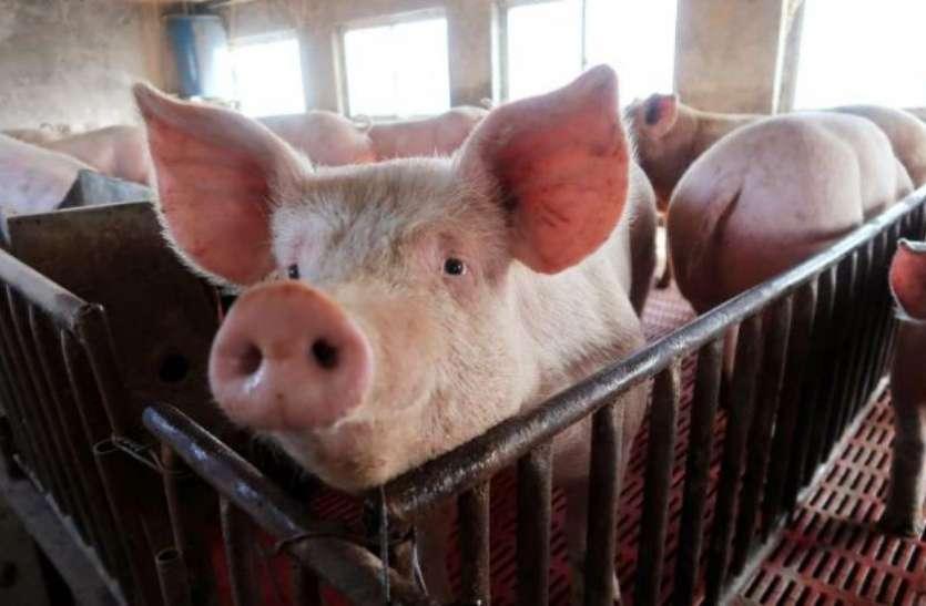 पोर्क की वजह से चीन में बढ़ी महंगाई, 15 माह के उच्चतम स्तर पर पहुंची