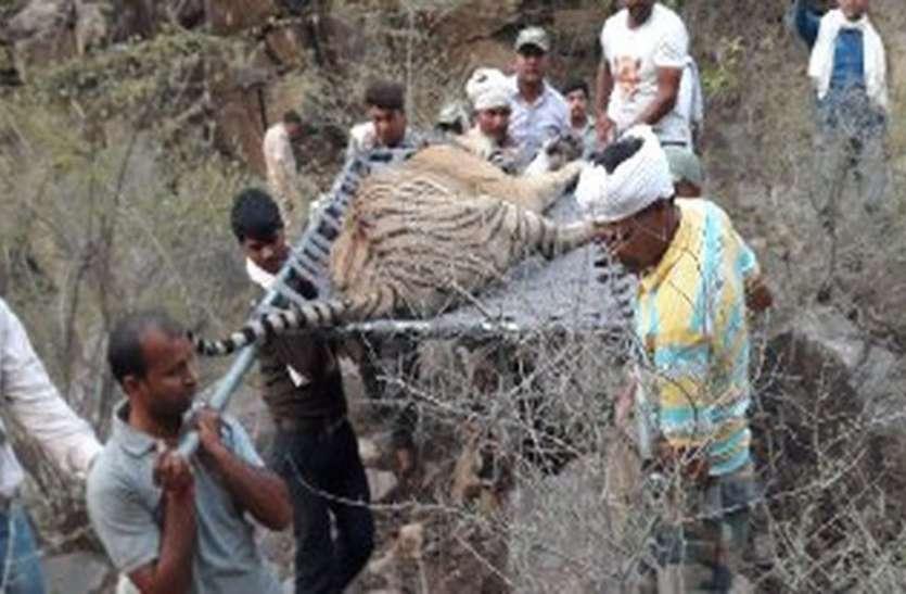 सरकार कराएगी सरिस्का में बाघ एसटी-16 की मौत की जांच