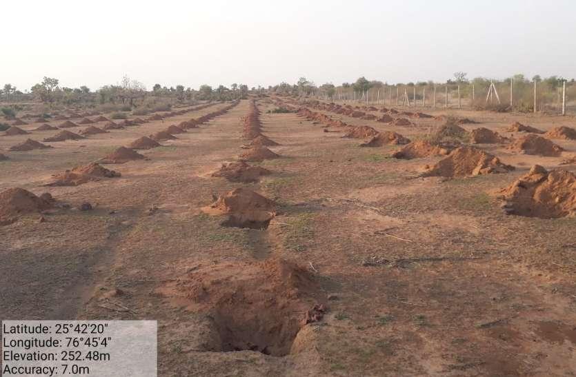 जंगल को हराभरा बनाने वन विभाग लगाएगा साढ़े नौ लाख पौधे
