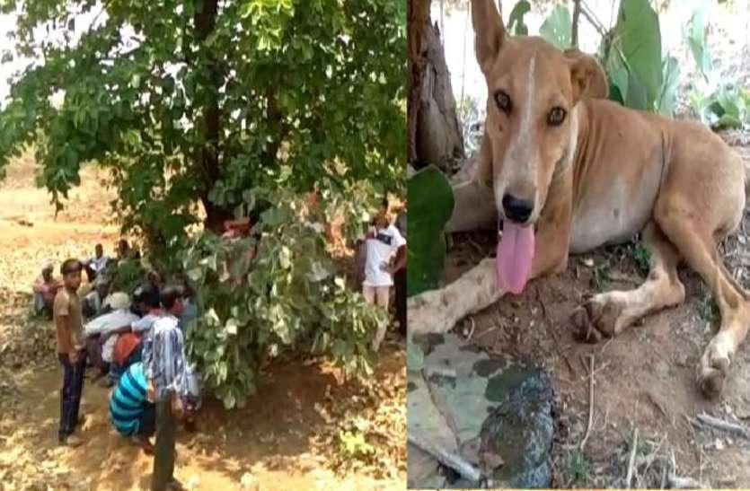 कुत्ते की वफादारी: जंगल में मालिक की हत्या के बाद रातभर की पहरेदारी, सुबह घर आकर ऐसे दी परिजनों को जानकारी, देखें वीडियो