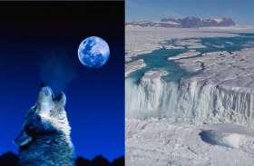 बर्फ में दबा मिला भेड़िए का सही सलामत सिर, वैज्ञानिकों का दावा- है 40 हजार साल पुराना
