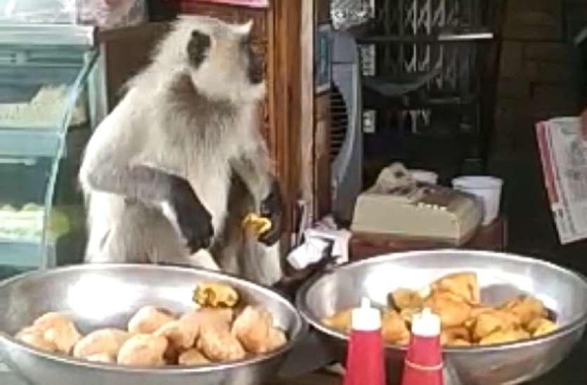 Video:मिठाई की दुकान में घुस गया बंदर,देखता रह गया दूकानदार