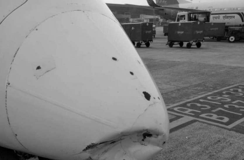 नन्ही चिडि ने ध्वस्त कर दिया विमान, सभी हैरान!