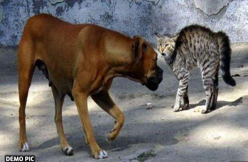 अलवर में युवक ने बिल्ली को कुत्ते के सामने फेंक दिया और उसका शिकार कराया फिर यूट्यूब पर वीडियो डाल दिया