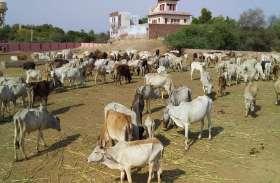 Bharatpur News पशुपालक क्रेडिट कार्ड से लोन में होगी आसानी