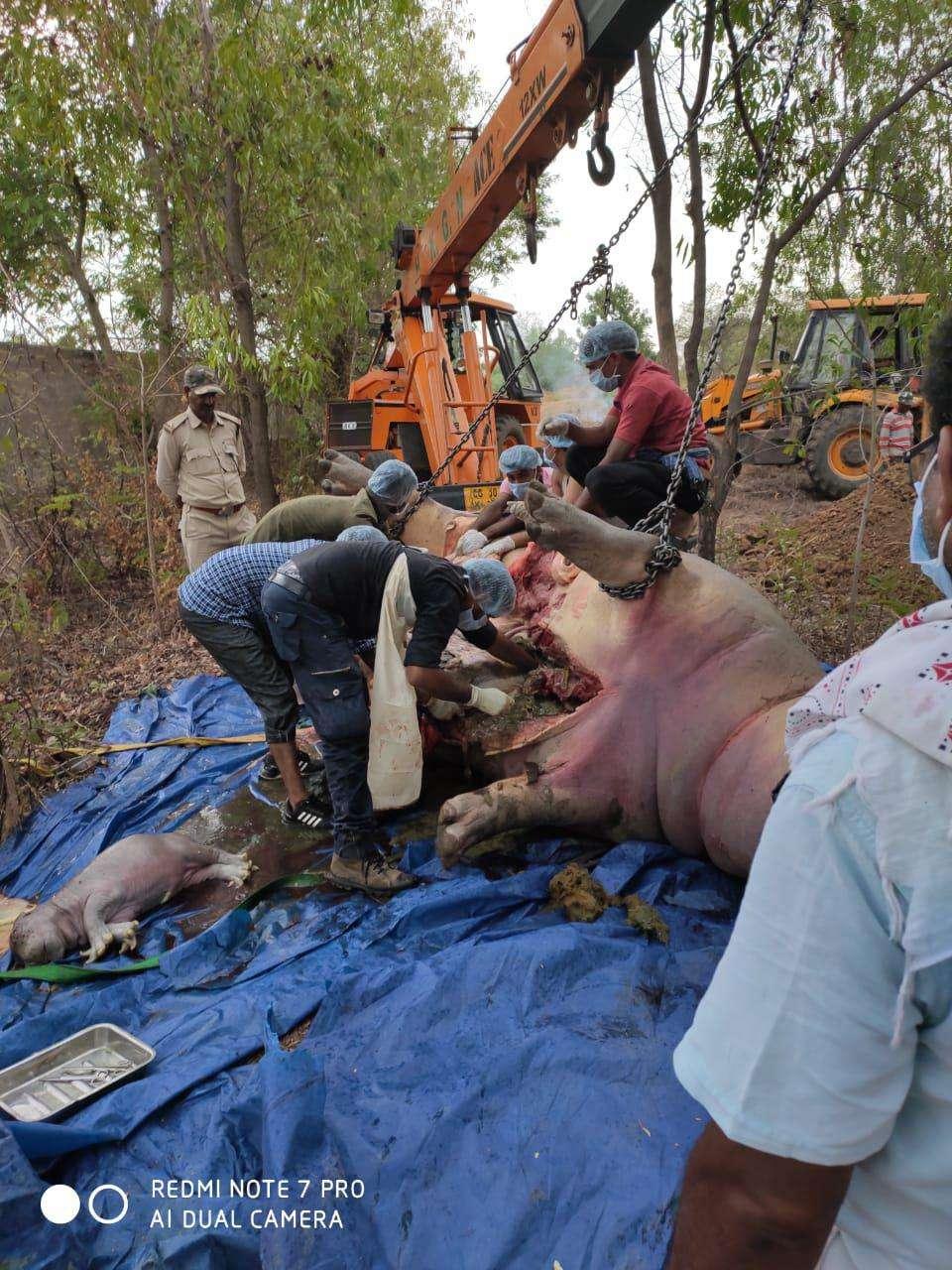 Hippo kid found in post-mortem In zoological garden in Chhattisgarh