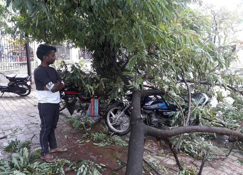 पश्चिम बंगाल से सिक्किम होते ओडिशा में बने द्रोणिका का यहां भी दिखा प्रभाव, तेज हवाओं के साथ हुई बारिश से गिरे पेड़