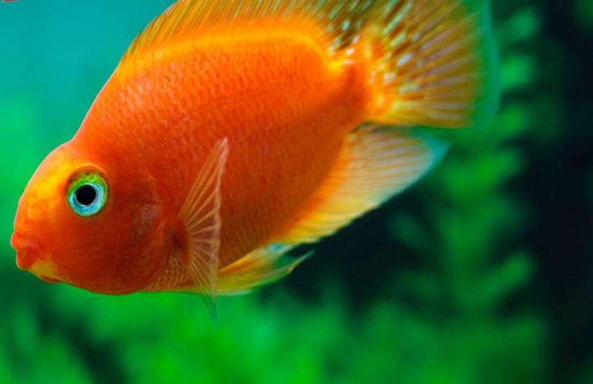 fish pot