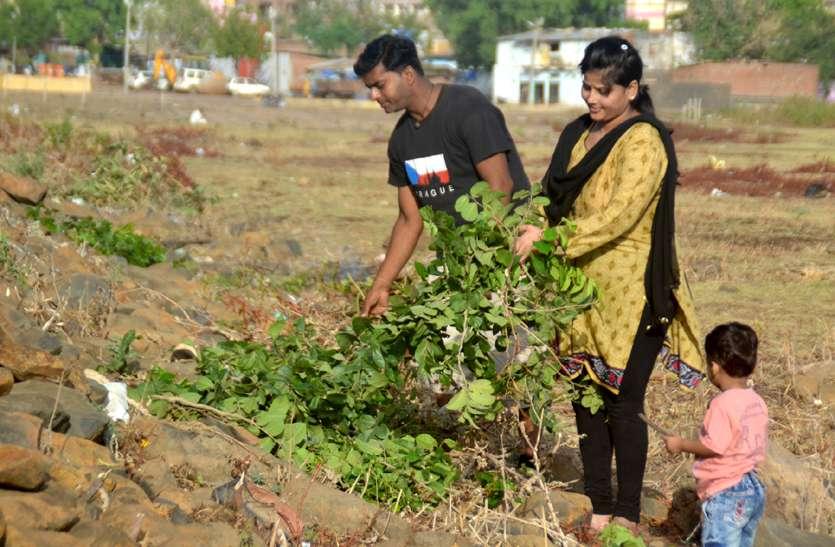 हाथों से काटकर निकाल रहे कटीली झाडिय़ां, श्रमदान से तालाब को कर रहे प्रदूषण मुक्त