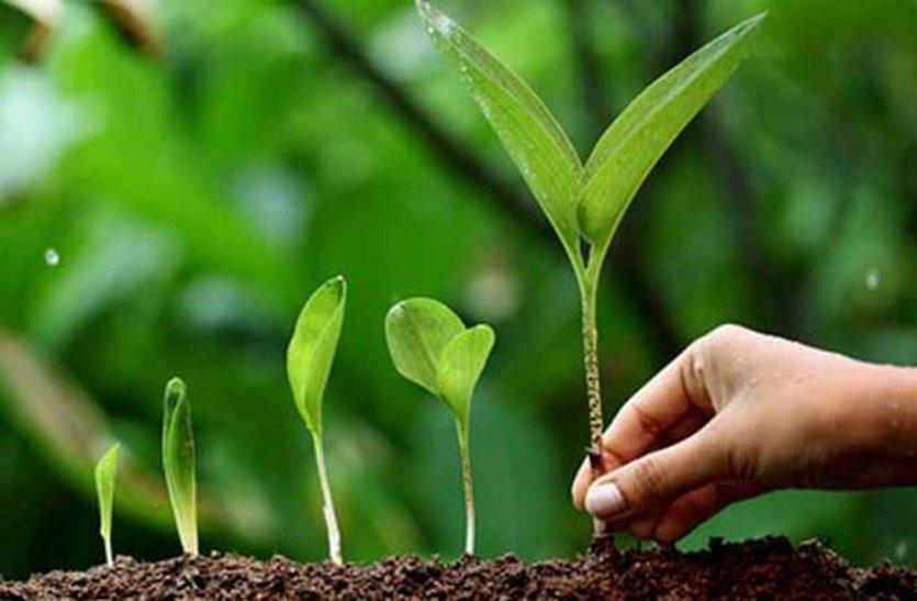 पिछले साल का 10 प्रतिशत लक्ष्य भी नहीं हुआ पूरा, फिर रोपने हैं 10 हजार पौधे, ये है प्लान