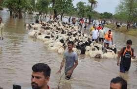 एक ही रात में भरा कौनसा तालाब, डूबने से क्यों हो गई सात सौ भैड़ की मौत