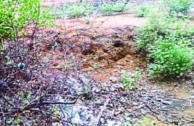 VIDEO रणथम्भौर वन क्षेत्र के आसपास फैंका जा रहा कचरा