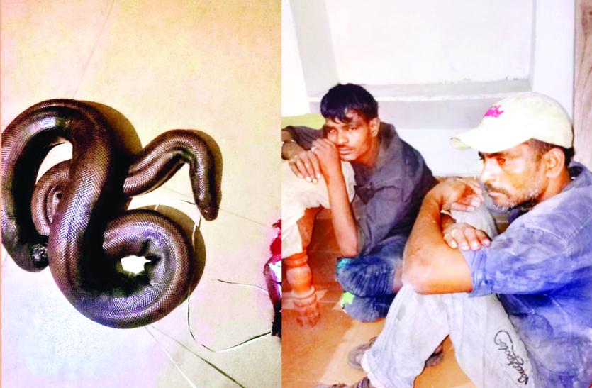 करोड़ों के बिकने वाले दुर्लभ दोमुंहा सांप के तस्कर और ग्राहक गिरफ्तार